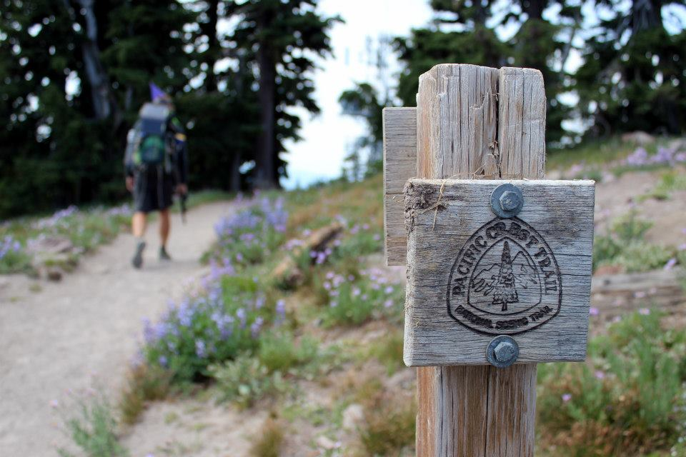 Hiker on PCT
