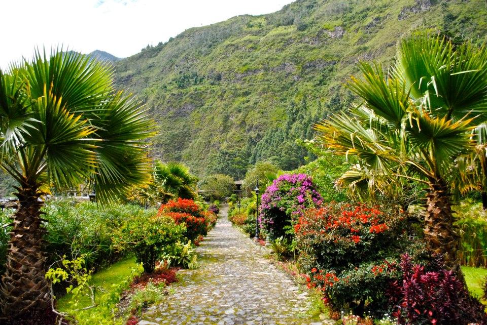 Ecuador garden