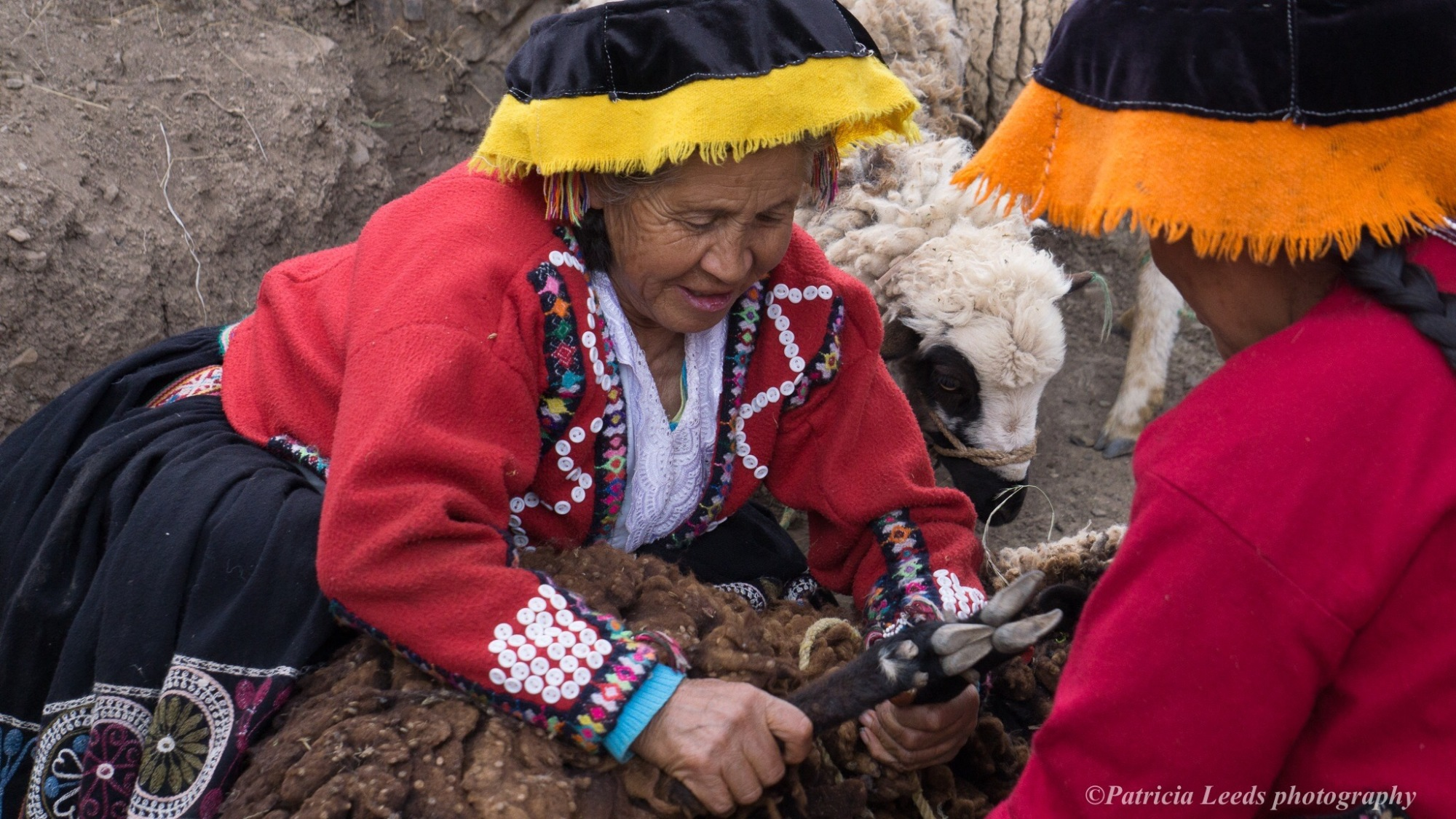 Amaru women shear sheep for wool